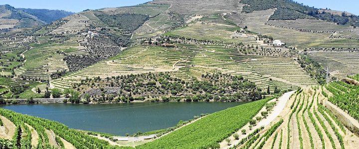 Los vinos de Las Arribes ya son un referente